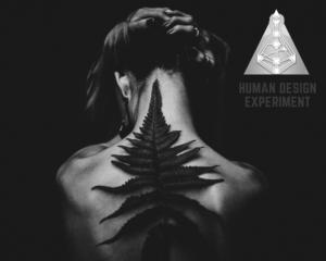 Human Design Manifestor